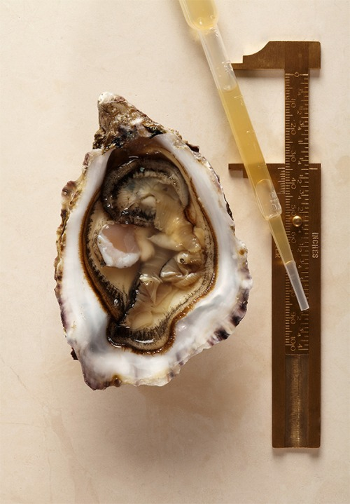 Comp-Oyster