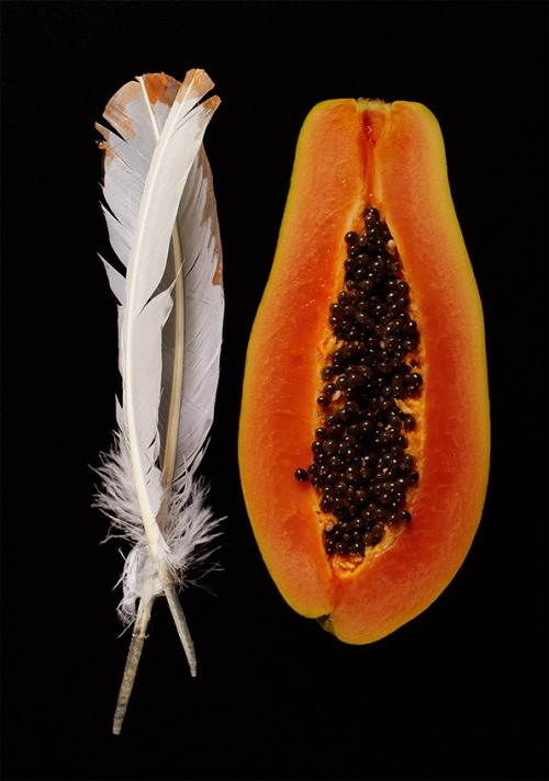 Comp_Papaya