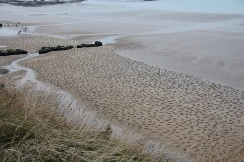 sand-1